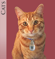 a tabby cat wearing a Top Tag Pet ID